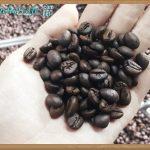 Rang cà phê – Nghệ thuật bắt nguồn từ đam mê