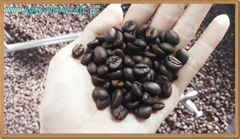 Rang cà phê - Nghệ thuật bắt nguồn từ đam mê