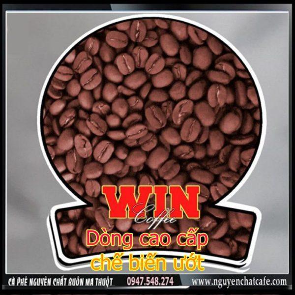 Cà phê arabica Lâm Đồng s19 chế biến ướt cao cấp